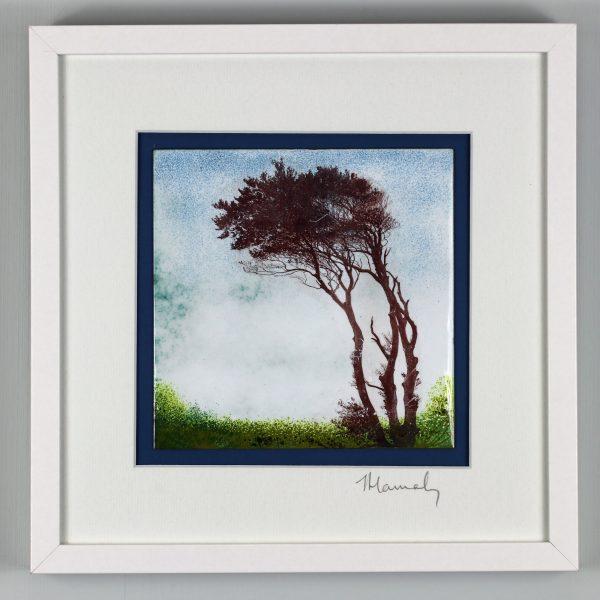 Windswept tree at Fairycross, North Devon. by Jeanette Hannaby