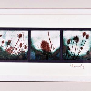 Enamel teasels by Jeanette Hannaby
