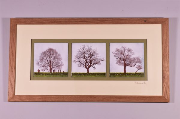 Enamel triptych picture of three trees. One tree is in the Forest of Dean ,the other two are on the Pennine Way in North Yorkshire